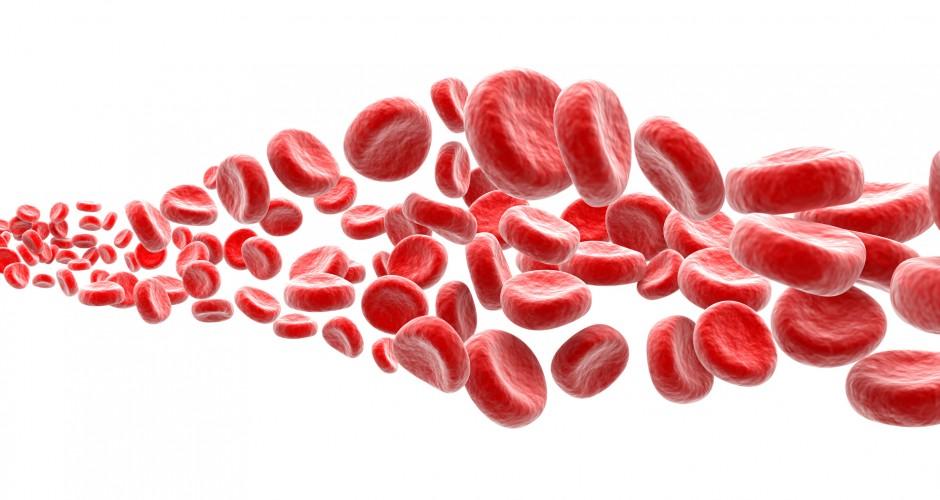 Saiba mais sobre a hematologia