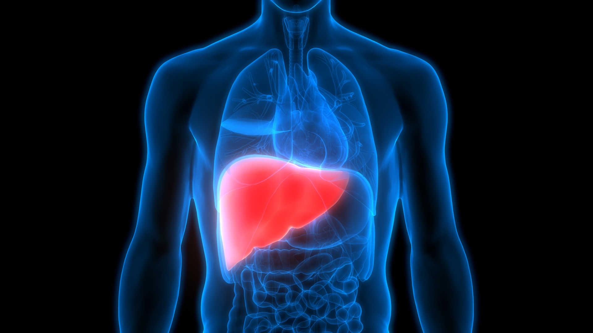 Sinais de alerta: saúde do fígado precisa de atenção